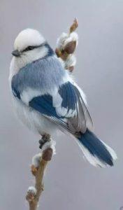 Οι Πνευματικές Σημασίες των Πουλιών