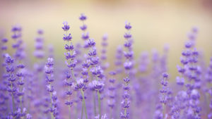 Τα λουλούδια του ζωδίου σου αποκαλύπτουν: